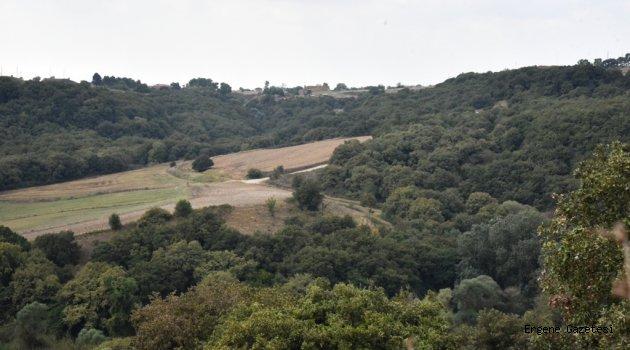 Çorlu'da 180 Bin Ağaç Kurtuldu
