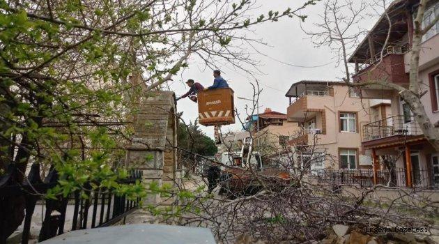 Süleymanpaşa Belediyesi Ağaç Budamalarına Başladı